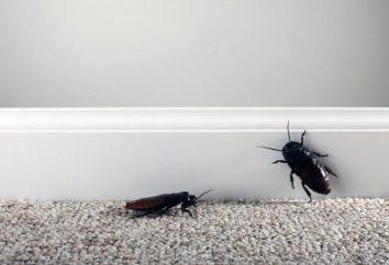 ¿Dónde están las cucarachas en el apartamento: las principales causas de los métodos de lucha y recomendaciones