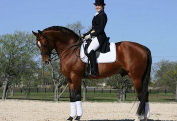 Che cosa può essere il tipo di andatura del cavallo?