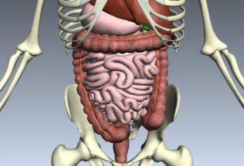 Jakie są narządy jest ludzki układ trawienny? Opis struktury i funkcji