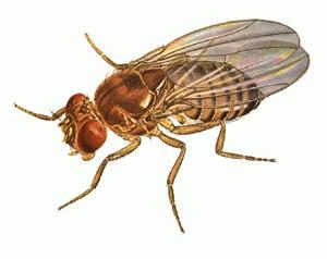Lutte contre les mouches: moyens de tuer les insectes