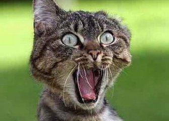 """""""Kovinan"""" a los gatos: guía y comentarios"""