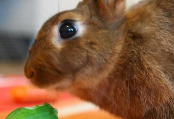 Czy to możliwe, aby dać króliki ogórki i cukinię?