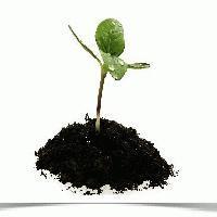 Biznes bez kapitału początkowego – trudne, ale możliwe