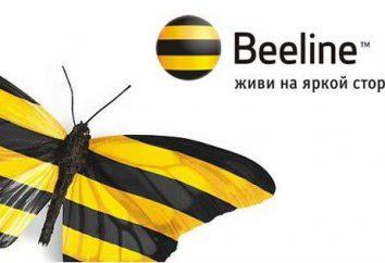 Beeline Bonus: jak używać? Co to jest Bonus Beeline?