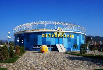 Delfinarium w Sudak – dużo zabawy
