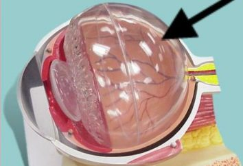 Oftalmologia: a destruição do vítreo do olho