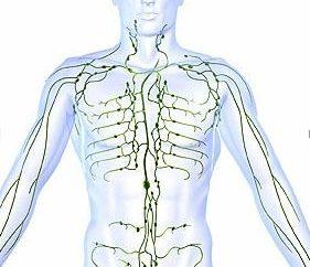 In Erinnerung an die Schule Anatomie natürlich: wo die Menschen sind Lymphknoten