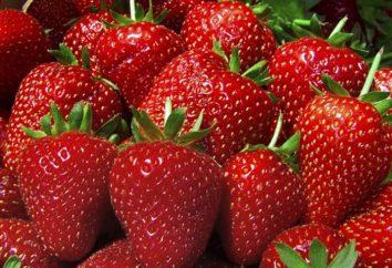 La fresa es útil para el cuerpo humano?