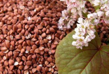 Sarrasin: teneur en calories pour 100 grammes de petits et grands avantages