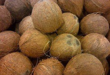 Kokos: korzyści i szkody