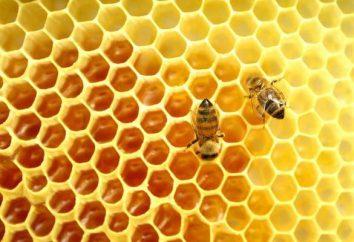 Il miele di api selvatiche: proprietà medicinali, indicazioni per l'uso