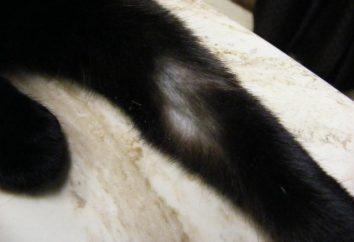 ¿Por qué se cae el cabello en un gato?