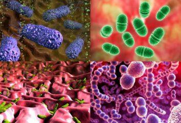 W jakich środowiskach żyją mikroorganizmy jednokomórkowe?