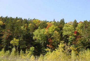 la cadena de suministro en el bosque. Conceptos generales y ejemplos