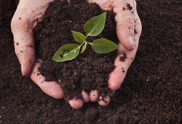 Que les plantes obtiennent du sol: une vue d'ensemble