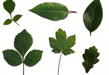 Forma parte de las plantas
