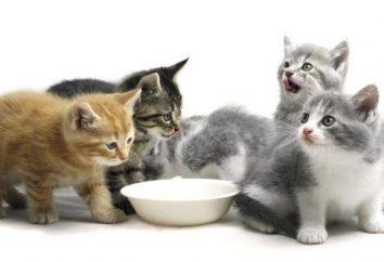 Gatito de 1,5 meses: cómo alimentar correctamente?