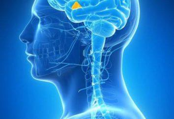 hormonas liberadoras hipotalámicas