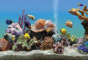 Aquarium im Inneren der modernen Wohnung