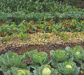 Che possono essere piantati nel mese di giugno, senza il rischio di essere in ritardo per le date