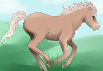 """Jak narysować kucyka. Jak narysować """"w maju Little Pony"""". Jak narysować kucyka z """"Przyjaźń – to cud"""""""