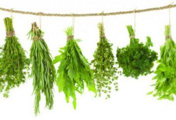 Odchudzanie na zioła – 25 kg miesięcznie. Zioła na utratę wagi: recenzje, wywarki, przepisy kulinarne