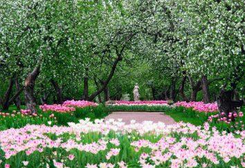 Apfelplantagen in Kolomenskoje (Foto)