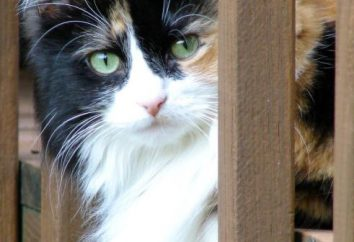 01 de março – Dia Internacional dos gatos: a história do surgimento de