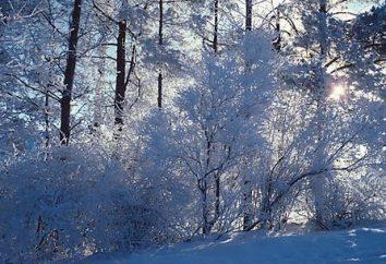 Wie man Schüler der Klasse 6 zu schreiben Beschreibungen über den Winterwald vorbereiten?
