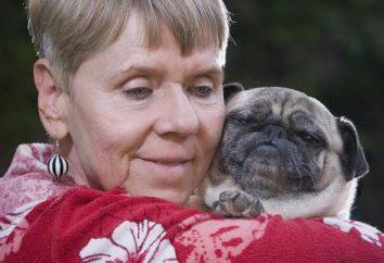 Mejor perro para una persona mayor. aserraderos BREVE DESCRIPCIÓN
