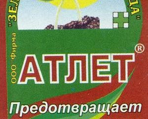 """""""Athlet"""" – Vorbereitung für Tomatensetzlinge (Foto)"""