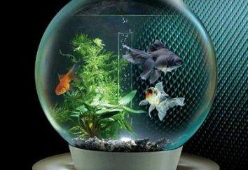 Jak hodować ryby w akwarium – fascynujący podwodny świat w naszym domu