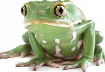 Zewnętrzna struktura żaby. Cechy zewnętrznej i wewnętrznej struktury płazów przy użyciu przykładu żaby
