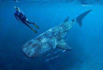 Océano Atlántico y el Pacífico: características, similitudes y diferencias