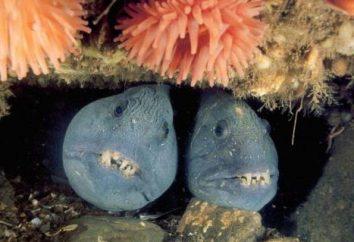 El fondo de los océanos del mundo investigó quién? Los investigadores océanos del mundo