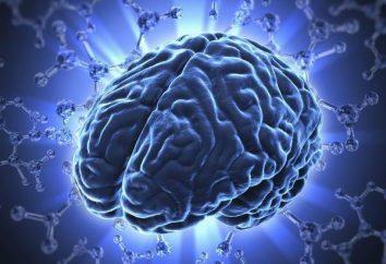 Co jest encefalopatia nadciśnieniowa? Przyczyny, objawy, leczenie