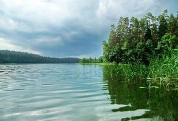 Lake Forest Białoruś – opowieść dzikiej przyrody