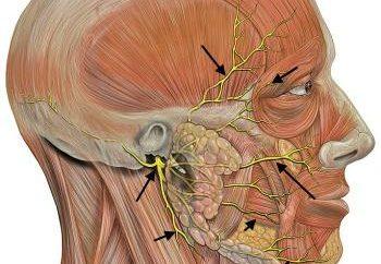 nervosas ternários: sintomas e tratamento