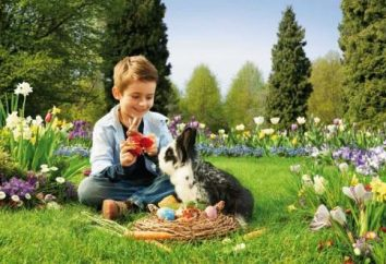 Co karmić królika w domu? indywidualna dieta