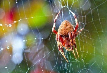 Sinais sobre aranhas. Quais são as aranhas na casa?