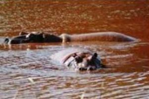 Gdzie jest rzeka Limpopo