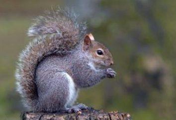 """Znaczenie phraseologism """"jak wiewiórka w kole"""": pochodzenie życia i współczesnej ekspresji"""