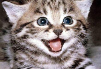 Les noms des chatons: les filles et les garçons
