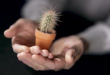 Cómo trasplantar un cactus, y es necesario?