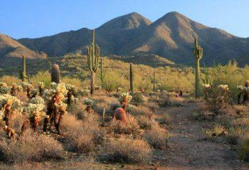 Deserto di Sonora: descrizione, la storia e fatti interessanti