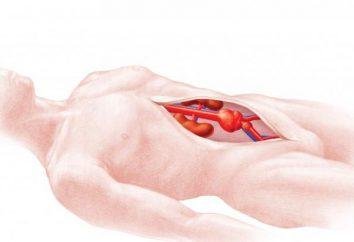Bauchaortenaneurysma: Symptome, Diagnose, Behandlung