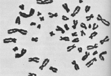 cromosomi maschili. Sul cromosoma Y che interessa ed è responsabile di cosa?