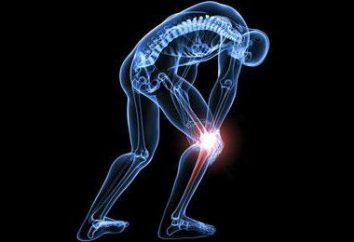 effektive Übungen und kompetente Beratung: Wie ein Knie zu Hause entwickeln