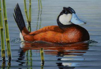 Pourquoi les canards flottent: énigmes pour l'ingéniosité et la connaissance de la grammaire