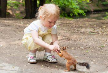 Comment apprivoiser l'écureuil dans le pays? Sauf que les protéines alimentaires noix